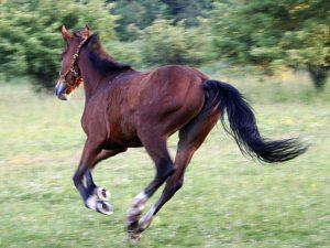 rebellious horses