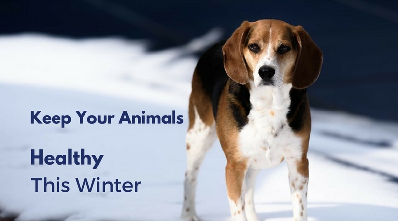 5 Tips to Keep Your Animals Healthy This Winter
